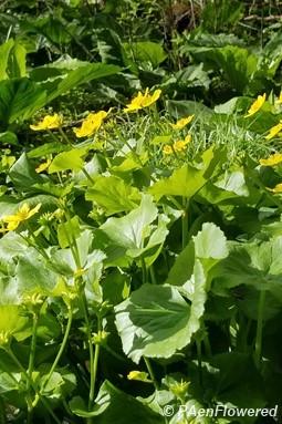 Plant form & habitat